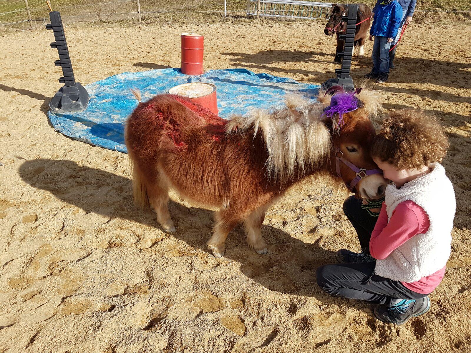Ponykindergarten auf dem Schafflerhof