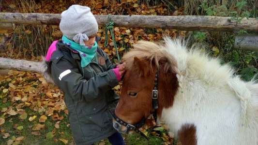 Tolles Programm mit Tieren auf dem Schafflerhof