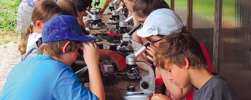 Natur durch Mikroskop und Stereolupe gesehen