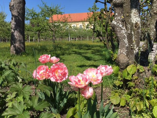Spurensuche im Dachauer Schloss