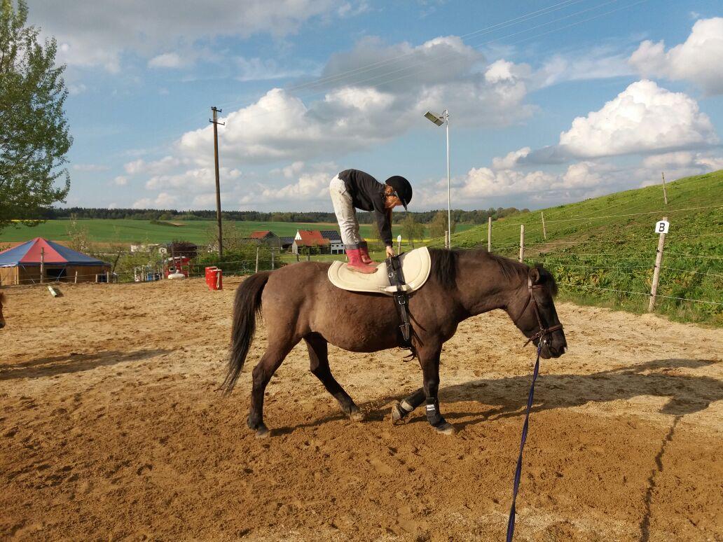 Das Pferd als Freizeitpartner